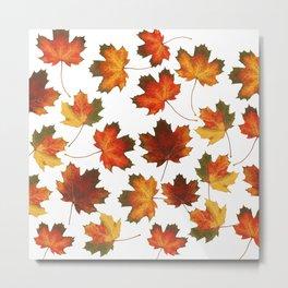 Autumn leaves, season, autumn, nature, forest Metal Print