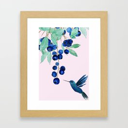 blueberry and humming bird Framed Art Print