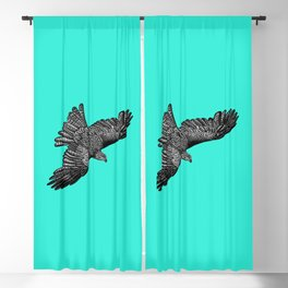 Black kite - bird of prey - ink illustration - turquoise Blackout Curtain