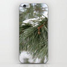 Winter Pine iPhone & iPod Skin