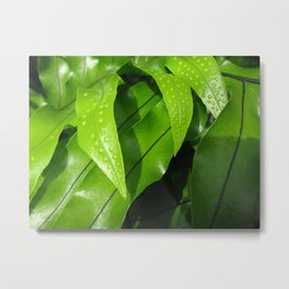 From the Conservatory #42 Metal Print