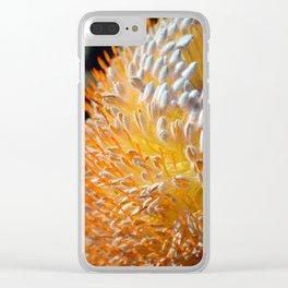Acorn Banksia up close Clear iPhone Case