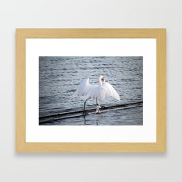 Egret On The Move With Supper Framed Art Print