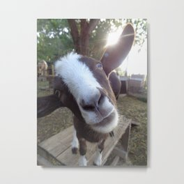 Goat Barnyard Farm Animal Metal Print