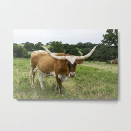 Brown and White Longhorn Standing in Pasture Metal Print