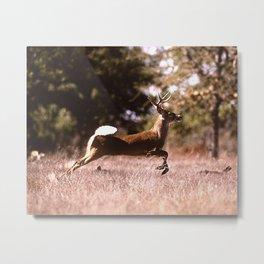 White-Tail Deer Running  Metal Print