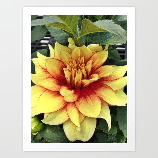 Flower of Hope Art Print