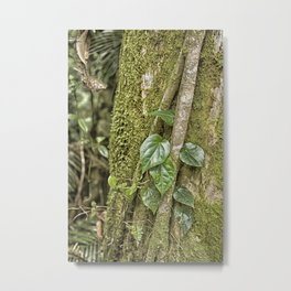Vine and Moss on Tree in the Rainforest Metal Print