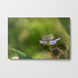 European dewberry Metal Print