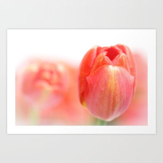 Sweet fresh Tulip... Art Print