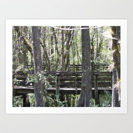 Six Mile Cypress Slough Art Print
