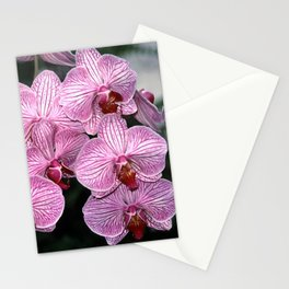 Pink Butterfly Phalaenopsis Orchid Stationery Cards