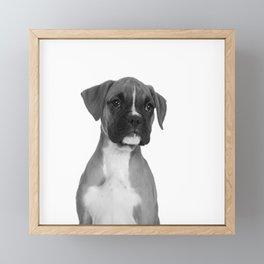 Boxer Pup Framed Mini Art Print
