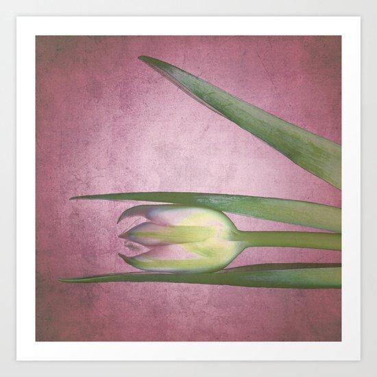 tulips studies 2 Art Print