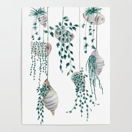 hanging plant in seashell Poster