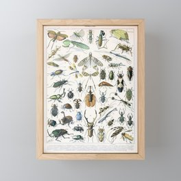 Adolphe Millot- Vintage Insect Print Framed Mini Art Print