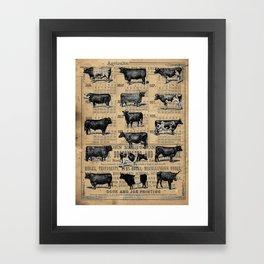 Vintage 1896 Cows Study on Antique Lancaster County Almanac Framed Art Print