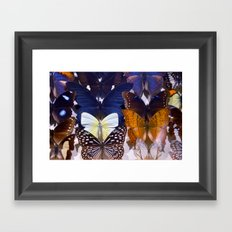 Farfalle II Framed Art Print