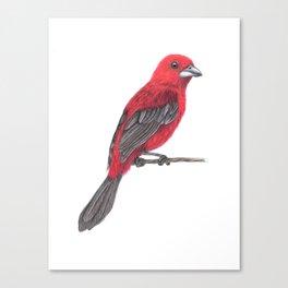 Brazilian Tanager Canvas Print
