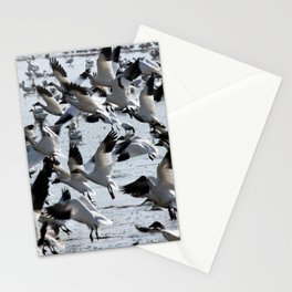 Oie des neiges - Snow Goose - ganso blanco Stationery Cards