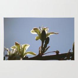 Ivory Hesperaloe Parviflora Flower Against Desert Sky Rug