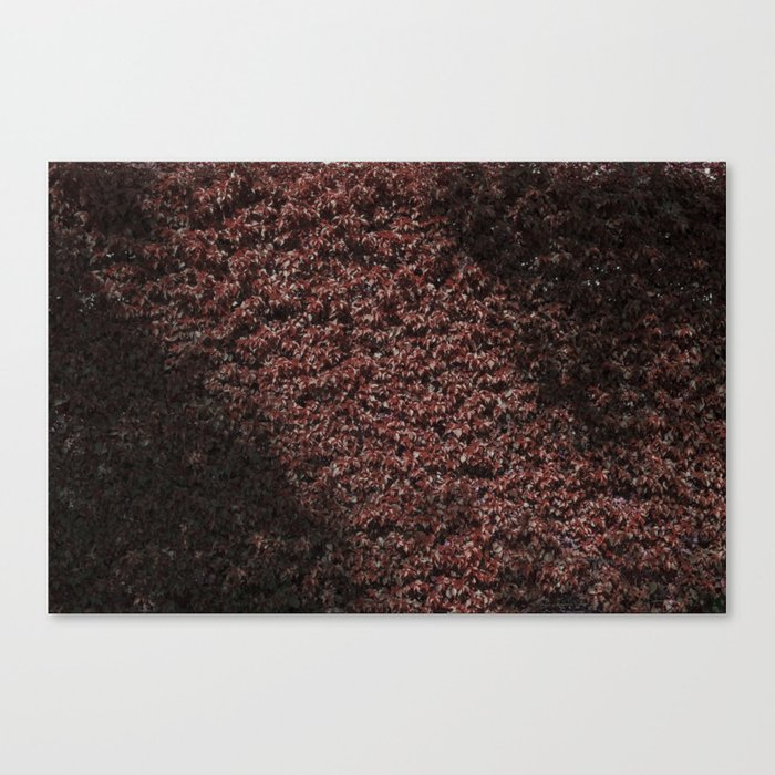 Autumn's red hedge Canvas Print