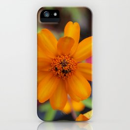 Zinnia Starbright iPhone Case