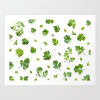 Herbs on White - Landscape Art Print