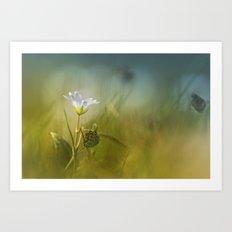 Cerastium fontanum subsp. vulgare  Art Print