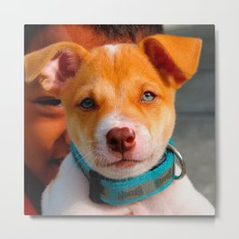 Gold and White Puppy Dog with Blue Collar Metal Print