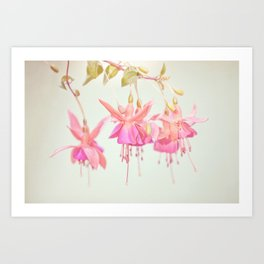 Colors Of Flowers Art Print
