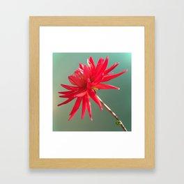 Red Imperfect Flower Framed Art Print