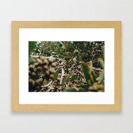 Gumtree 2 Framed Art Print