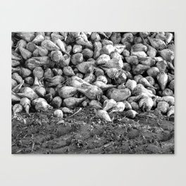 """Fields 5016"" Canvas Print"