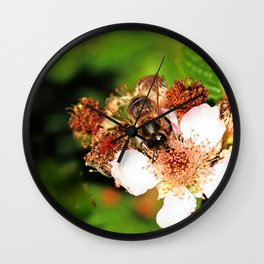 Honey Bee on a Blackberry flower Wall Clock