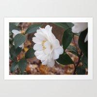 White Camellias Rampant Art Print