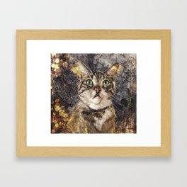 Brian The Cat  Framed Art Print
