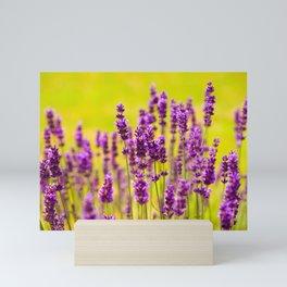 Lavender Mini Art Print