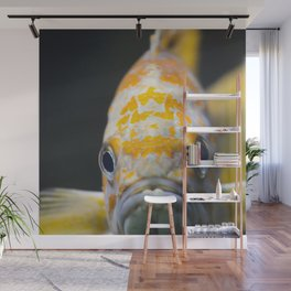 sad goldfish Wall Mural
