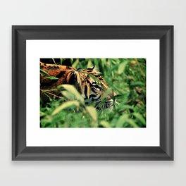 Stalking Framed Art Print