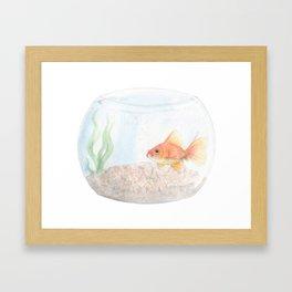 Grumpy Goldfish Framed Art Print