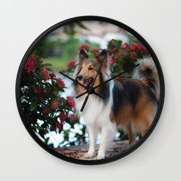 Sheltie in the garden Wall Clock