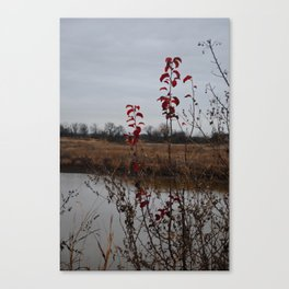 growth and decay Canvas Print