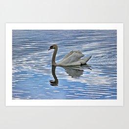 Proud mute swan Art Print