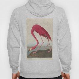 Vintage Flamingo Illustration (1838) Hoody