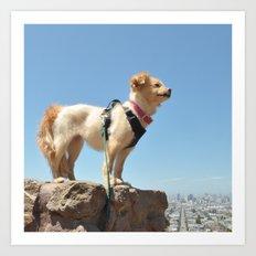Wonder Dog in San Francisco Art Print