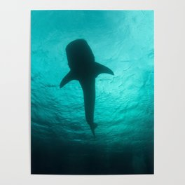 Whale shark silhouette Poster