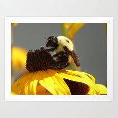 bee 2016 Art Print