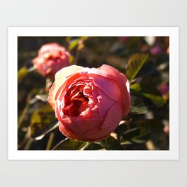 That which we call a Rose Art Print