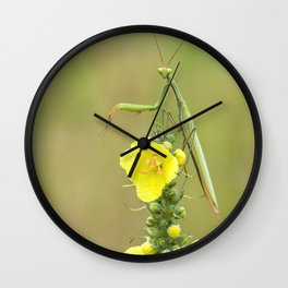Praying Mantis on top of a yellow flower Wall Clock
